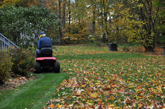 Senior on Riding Mower and Mulching Autumn Leaves Stock Photo
