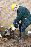 Senior sawing Stock Image