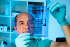 Senior scientist analyses Western blot. Results, shallow DOF, focus on the gel stock photo