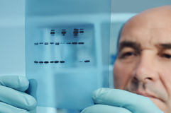 Senior scientist checks results of protein experiment. Senior scientist or tech checks results of protein blot analysis on X-ray film Royalty Free Stock Photography