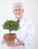 Senior scientist holding plant. Senior scientist holding small potted tree Stock Photo