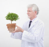 Senior scientist holding plant. Senior scientist holding small potted tree Stock Images