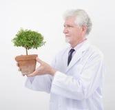 Senior scientist holding plant stock images
