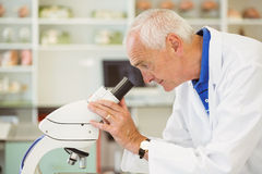Senior scientist looking through microscope Royalty Free Stock Images