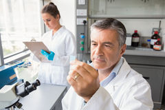 Senior scientist looking at slide. At the laboratory Stock Photo
