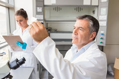 Senior scientist looking at slide. At the laboratory Stock Image