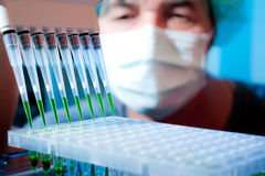 Senior scientist prepares DNA for amplification. Senior scientist loads pcr plate for DNA analysis with multichannel pipette royalty free stock photography