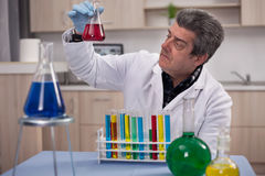 Senior scientist researching in laboratory Royalty Free Stock Photography