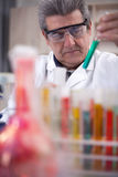 Senior scientist researching in laboratory Royalty Free Stock Photos