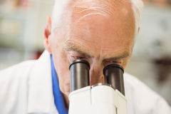 Senior scientist working with microscope Royalty Free Stock Images