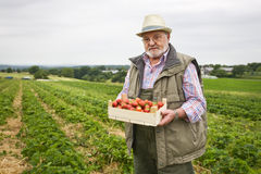 Senior in Strawberry Field Stock Photography