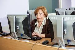 Senior Student Using Desktop PC Stock Image