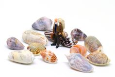 Senior traveler and sea shells on white background. Aged backpacker and seashells collection. Stock Photo