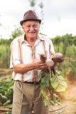 Senior trzyma wiązkę burak zdjęcia royalty free