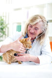 Senior vet inspection a little cat Royalty Free Stock Photography