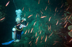 Senior Videographer - Purple Anthias Fiji. A baby boomer underwater videographer films a school of Purple Anthias deep inside a crevice in the lush coral reef stock photography