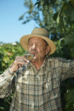 Senior vintner testing wine Royalty Free Stock Photo