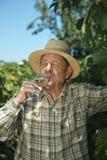 Senior vintner testing wine. Outdoors in vinery Royalty Free Stock Photo