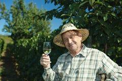 Senior vintner testing wine. Happy senior vintner testing wine outdoors in vinery Royalty Free Stock Photos