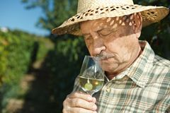 Senior vintner testing wine. Outdoors in vinery Stock Photography