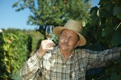 Senior vintner trying wine. Outdoors in vinery Stock Photo