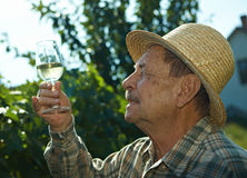 Senior vintner trying wine. Outdoors in vinery Royalty Free Stock Photos