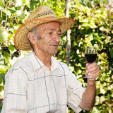 Senior viticulturist Stock Photo
