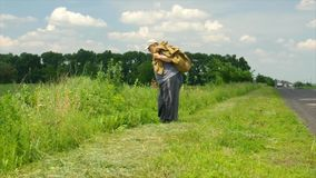 Senior with walking stick carrying heavy sack moving on a roadside at summer season stock video