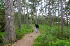 Senior walks in a pine forest Royalty Free Stock Photography