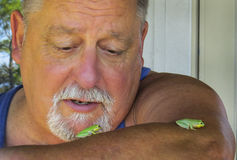 Senior Watches Green Tree Frogs Stock Photos