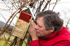 Senior is watching a bug hotel Royalty Free Stock Photography