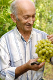 Senior winegrower Stock Photo