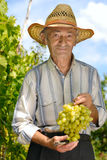 Senior winegrower Royalty Free Stock Images