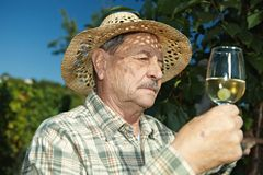 Senior winemaker with glass of wine. Senior winemaker testing wine outdoors in vinery stock photos