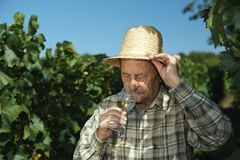 Senior winemaker testing wine. Outdoors in vinery stock photo