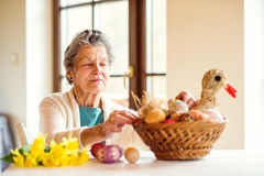 Senior woman arranging basket with Easter eggs and daffodils Royalty Free Stock Photography