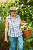 Senior woman with a basket of harvested vegetables Stock Photos