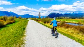 Free Senior Woman Biking Along The Alouette River On The Dyke Surrounding Pitt Polder At The Town Of Maple Ridge In British Columbia Stock Photo - 116925210
