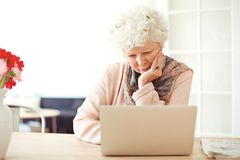 Senior Woman Busy Browsing Her Laptop Stock Photos