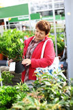 Senior woman buying plants Stock Photos