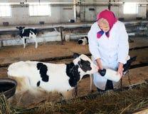 Senior woman caress calf Stock Photos