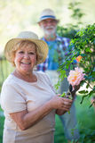 Senior woman cutting flower with pruning shears Royalty Free Stock Photos