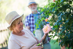 Senior woman cutting flower with pruning shears Stock Image