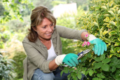 Senior woman cutting on plants in spring time Royalty Free Stock Photos