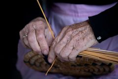 Senior woman knitting a traditional basket with reeds stock photo