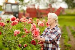Senior woman with dahlia flowers at summer garden Stock Photos