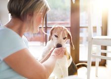 Senior woman and dog Royalty Free Stock Images