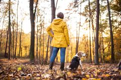 Senior woman with dog on a walk in an autumn forest. Active senior woman with dog on a walk in a beautiful autumn forest. Rear view royalty free stock photos