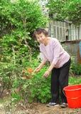 A senior woman doing garden labor stock photography
