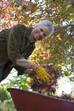 Senior woman doing yard work in autumn Royalty Free Stock Image